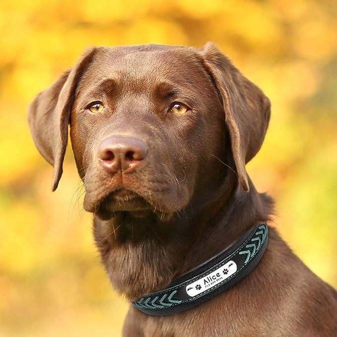 con Nombre Grabado para Perro Labrador Golden Retriever alem/án Pastor D/álmata. Pet Artist Collar de Piel Trenzada para Perro Personalizable Grande tama/ño Mediano