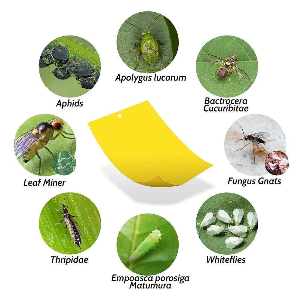 SELUXU 10PCS trampas pegajosas Amarillas de Doble Cara para Las pulgas de Insectos de Plantas voladoras Whiteflies