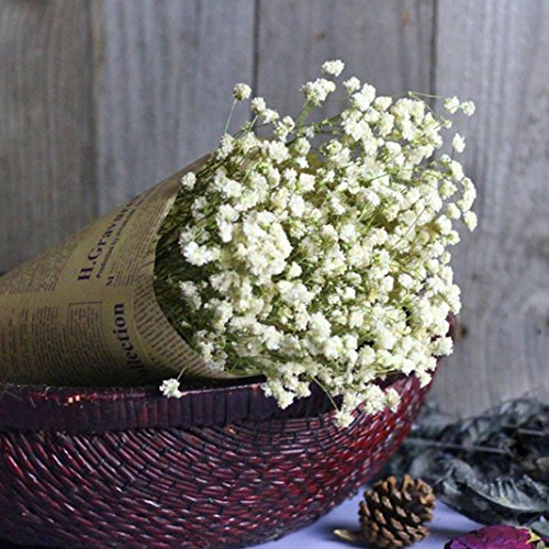 Vibola Natural Dried Flower Gypsophila Star Baby's Breath Home Decor Dried Flower Sky Star for home decor (A)