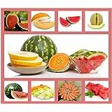 Heirloom Fruit Seeds- Non Hybrid- Real Survival Seeds. Honeydew Green Melon, Banana Melon, Honey Rock Cantaloupe…