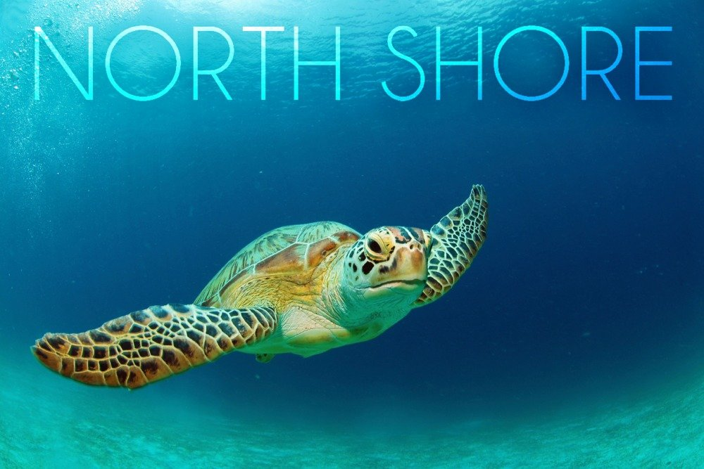North Shore , Hawaii – Sea Turtle Swimming 36 x 54 Giclee Print LANT-81173-36x54 B072Q1H6MP  36 x 54 Giclee Print
