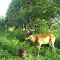Himalayan Nature Deer Salt Brick 3-5 lbs, Natural Himalayan Rock Licking Salt Block Animals