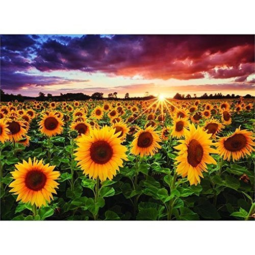 Perre Group 1018?Breitung Field With Sunflowers At Dusk 'Jigsaw Puzzle 1,000?Pieces by Perre (Dusk Crib)