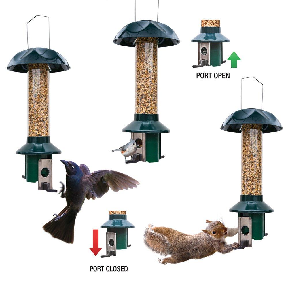 garden diy handyman easy open winter all bird feeders family structures pan the cake feeder view