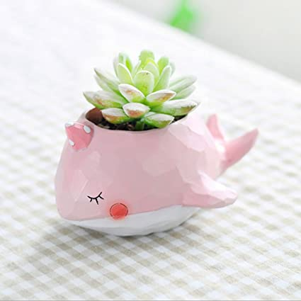 Amazon Messagee Cute Pink Whale Succulent Pots With Drainage