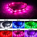 Blazin' Safety LED Dog Collar – USB Rechargeable with Water Resistant Flashing Light by Blazin' Bison