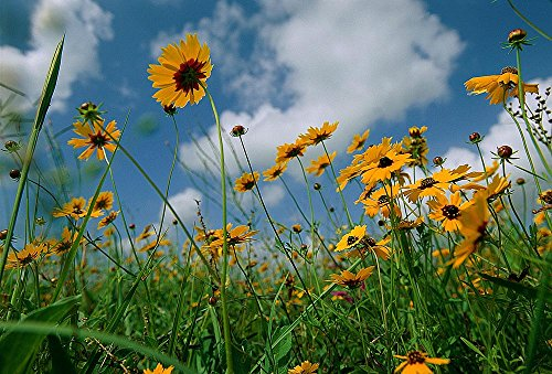 Prairie Wildflowers Wallpaper Wall Mural - Self-Adhesive - Multiple Sizes - National (Wildflower Wallpaper)