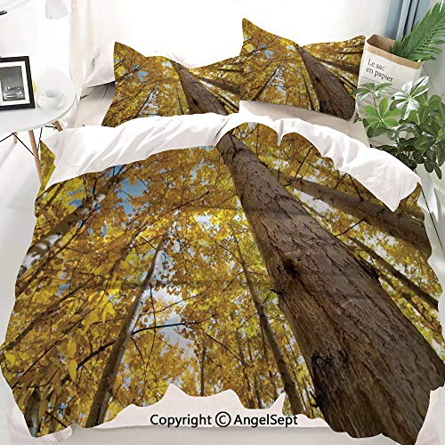 Forest Home Decor Decor Duvet Cover Set Twin Size,Up View of Fall Aspen Tree Leaves in Fade Tone Autumn Season Photo,Decorative 3 Piece Bedding Set with 2 Pillow Shams