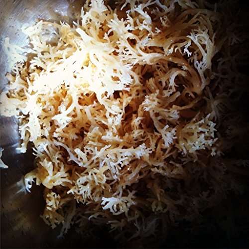 - SEA MOSS 100% NATURAL (WILD) DR SEBI IRISH MOSS
