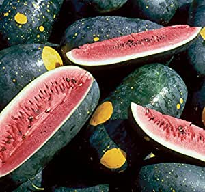 Seed Savers 1241A Watermelon Moon and Stars (Cherokee) Organic Seed Packet