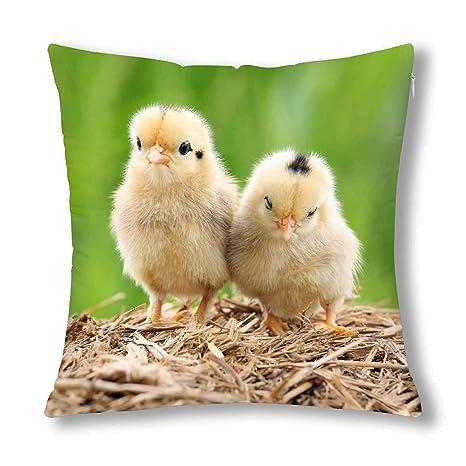 Kinhevao Bebés Lindos Polluelos de Pollo Decoración de ...