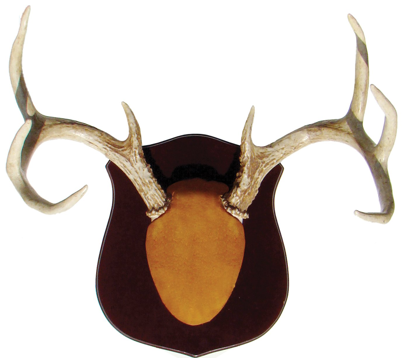 Deer antler mounting kit instructions - Obitt The Ultimate Antler Mounting Kit
