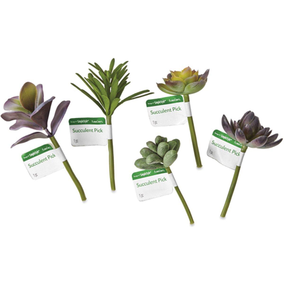 Succulent Picks Display Small 25/Pkg-