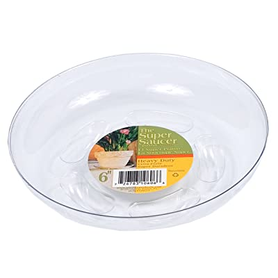 Plastec SS006 Super Plant Saucer, 6-Inch : Plant Saucers : Garden & Outdoor [5Bkhe0801857]