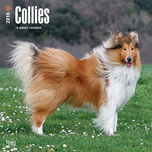 Collies 2018 Monthly Square Wall Calendar