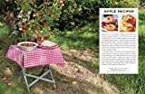 The Illustrated World Encyclopedia of Apples: A