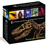 American Museum of Natural History Card Deck: 100 Treasures from the Hall of Science and World Culture