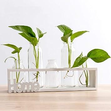 Etwas Neues genug SUNRUNERS Glas-Pflanzgefäße für den Innenbereich mit @WH_05