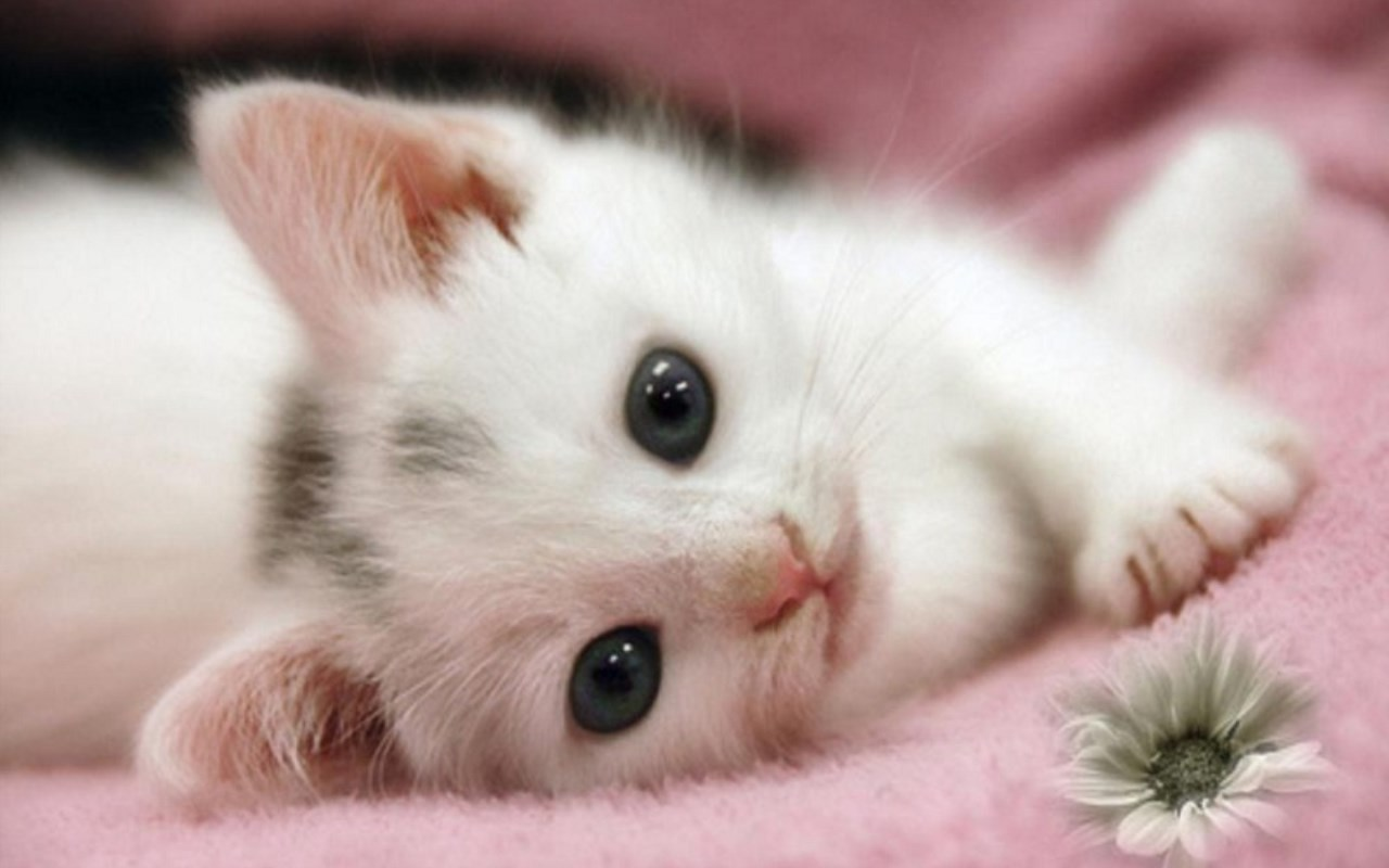 Cute Cat Wallpaper Photo