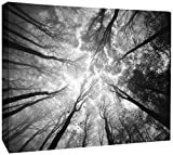 JP London DDCNV1 X 31004 Ready to Hang Feature Wall Art Tree Tops Sky Branches Cloud Reach Black White 2'' Thick Heavyweight Gallery Wrap Canvas 60'' x 40''