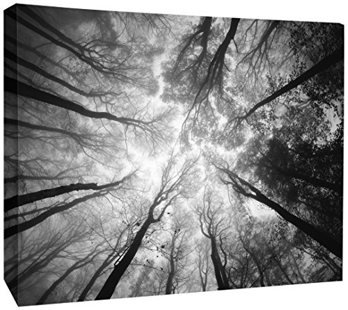 JP London DDCNV1 X 31004 Ready to Hang Feature Wall Art Tree Tops Sky Branches Cloud Reach Black White 2'' Thick Heavyweight Gallery Wrap Canvas 60'' x 40'' by JP London