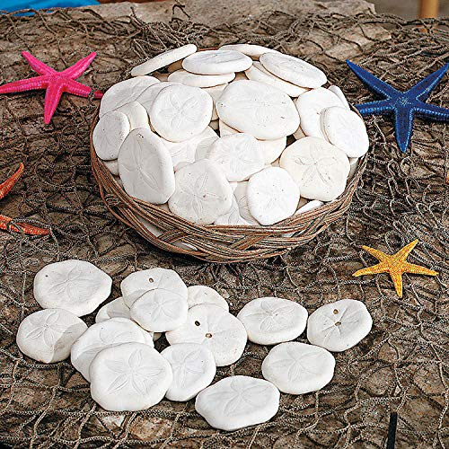 Fun Express - Sand Dollars in Basket - Craft Supplies - Bulk Craft Accessories - Feathers and Shells - 1 Piece