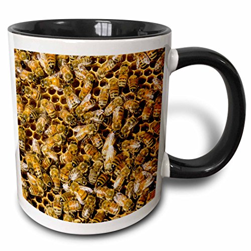 3dRose Danita Delimont - Insects - Bee keeping at Arlos Honey Farm, Kelowna, British Columbia, Canada. - 15oz Two-Tone Black Mug (mug_206486_9)