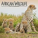 African Wildlife Calendar - 2016 Wall calendars - Animal Calendar - Monthly Wall Calendar by Avonside