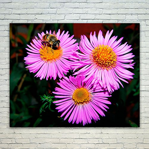 Westlake Art - Flower Aster - 11x14 Poster Print Wall, used for sale  Delivered anywhere in Canada