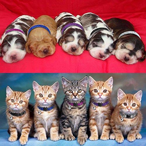 Beirui 5 Set Nylon Bling Dog Kitten Cat Adjustable Breakaway Collar Bells - Sparkling Quick Release Safe Buckle Cat Collar - Glitter Puppy ID Collar - X-Small Neck 7-10.5'' by Beirui (Image #1)