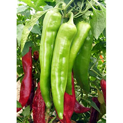 New Mexico Big Jim Chili Pepper 50 Seeds, NuMex, Hatch, Ristra : Garden & Outdoor