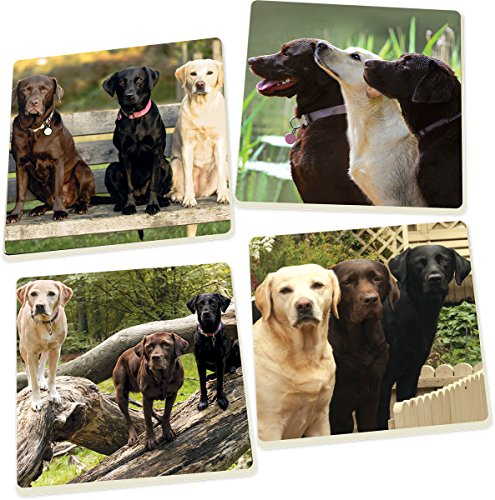 P. Graham Dunn Yellow Chocolate and Black Labrador Retrievers 5 x 5 Super Absorbent Ceramic Coasters, Set of 4
