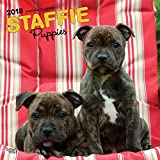 Staffordshire Bull Terrier Puppies 2018 Wall Calendar