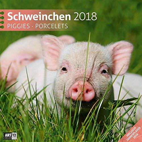 Schweinchen 30x30 2018