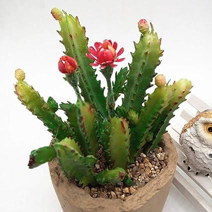Christmas Succulent Decor.Amazon Com Onemai 7pcs Lot Cactus Flower Succulents Plants