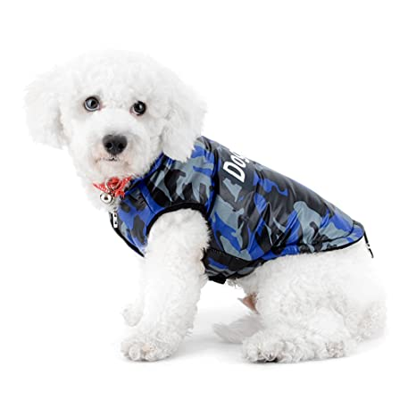Razze cani grossa taglia foto nx ajima for Nomi per cani taglia piccola