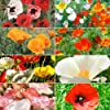 "500 Seeds, Poppy ""Explosion Mixture"" Seeds By Seed Needs"