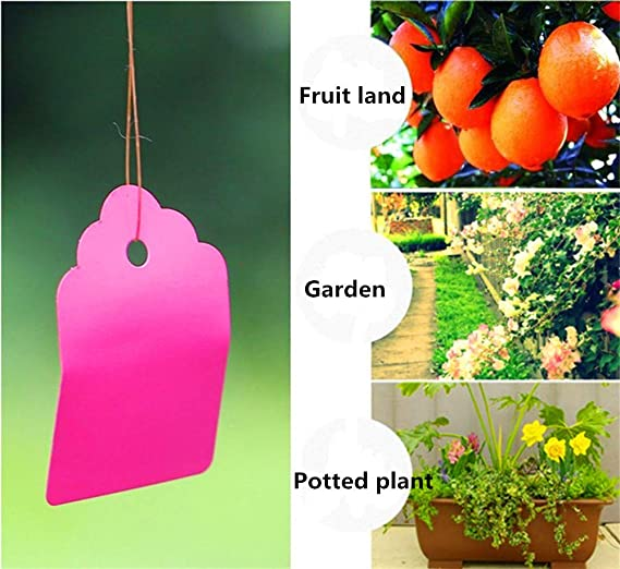 Etiquetas para Colgar Plantas Yu2d de 3,6 x 2,5 cm, 100 Unidades ...