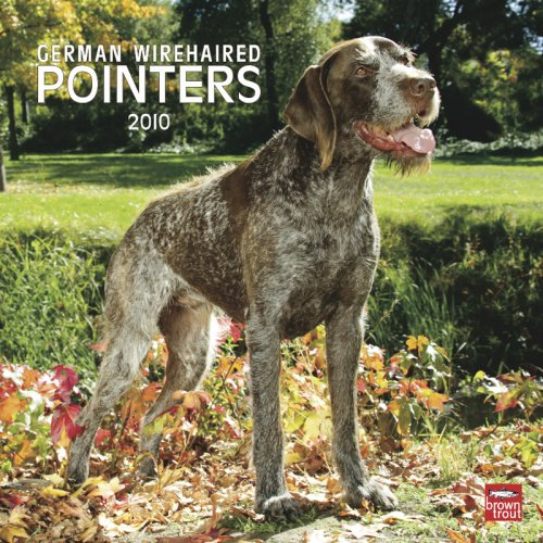 Pointer 2010 Calendar (German Wirehaired Pointers 2010 Square Wall)