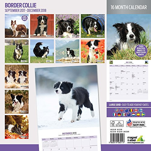 Border Collie 2018 Traditional Wall Calendar Photo #2