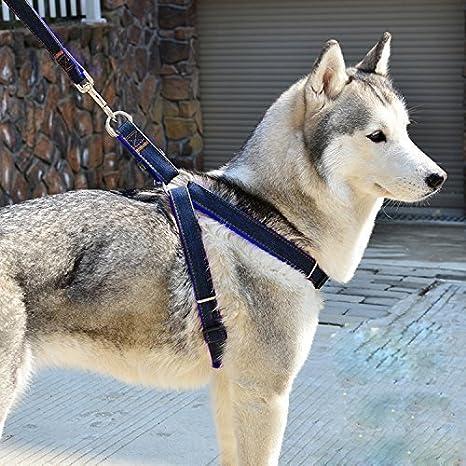 Arnés para perro mediano arnés ajustable pecho de deporte arnés ...