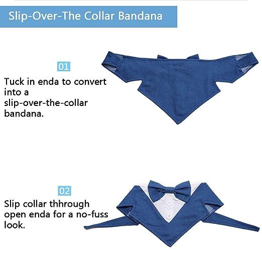 Alian Bow Corbata estilo y cuello de perro, diseños de corbata ...