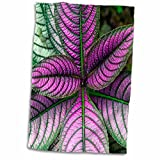 "3D Rose Persian Shield Plant-Strobilanthes Dyerianus-Costa Rica Hand Towel, 15"" x 22"", Multicolor"