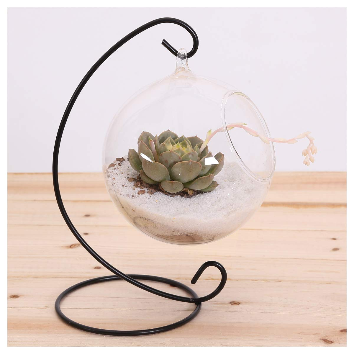 10L0L Charming Clear Hanging Glass Ball Vase Air Plant Terrarium Kit/Succulent Flowerpot Container w/Black Metal Stand (Big)