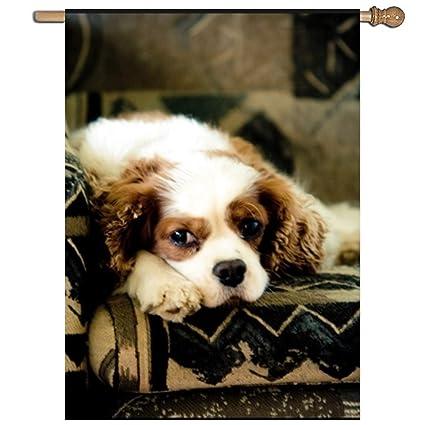 Amazon Com Efyh Couch Potato Dogs Welcome Garden Flag