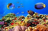 CHOIS Custom Films CF3042 Animal Fishes Cluster Coral Reefs Glass Window Frosted 4' W by 3' H