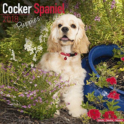 Cocker Spaniel Puppies Calendar - Dog Breed Calendars - 2017 - 2018 wall Calendars - 16 Month by Avonside (Cocker Spaniel Calendar)