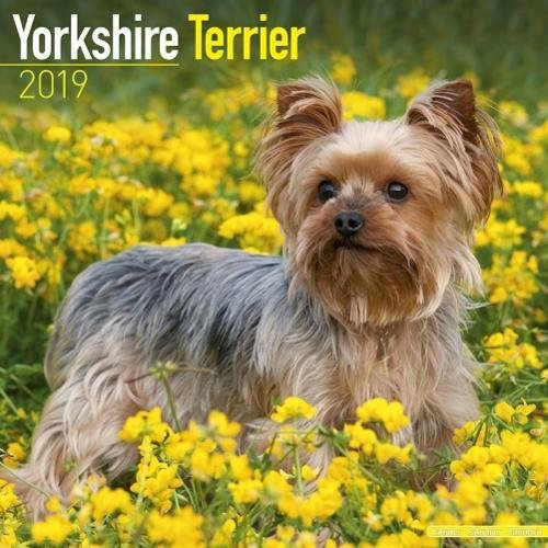 (Yorkshire Terrier Calendar 2019)