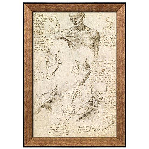 Superficial Anatomy of the Shoulder and Neck by Leonardo Da Vinci Framed Art