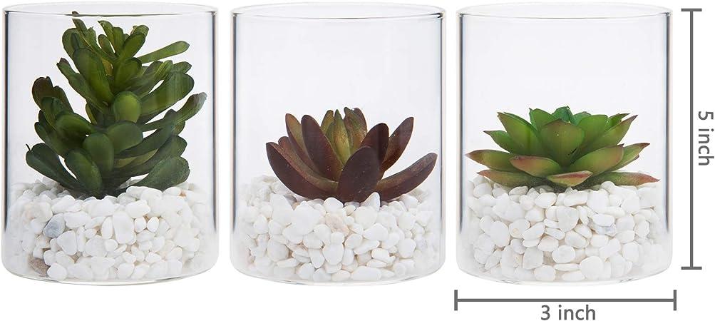 MyGift Suculentas Artificiales con macetas de Cristal Transparente y Piedras Blancas, Juego de 3: Amazon.es: Jardín